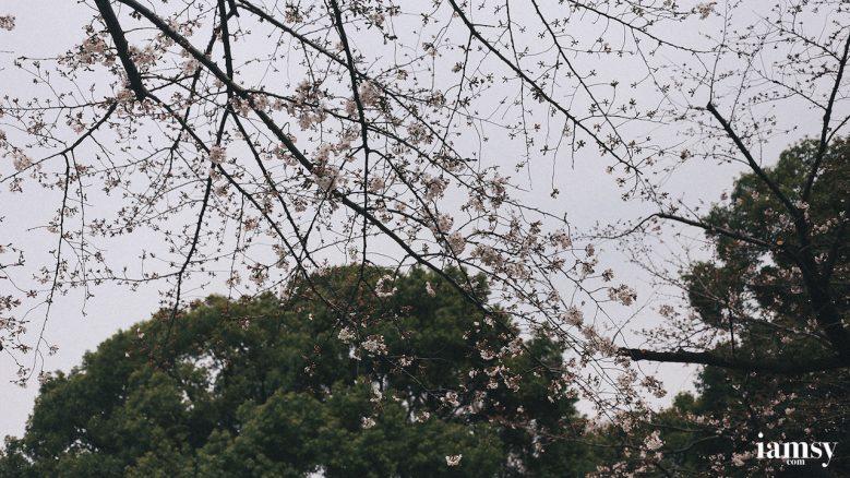 2016-iamsy-mar-tokyo-ueno-park-19