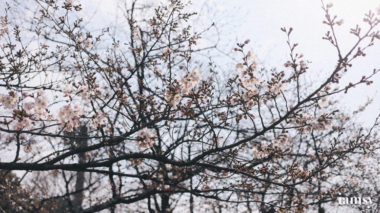2016-iamsy-mar-tokyo-ueno-park-35