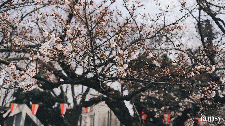 2016-iamsy-mar-tokyo-ueno-park-38