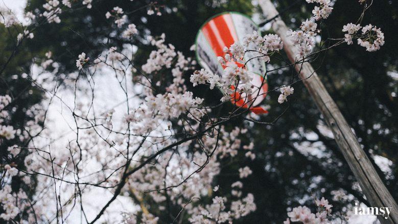 2016-iamsy-mar-tokyo-ueno-park-48